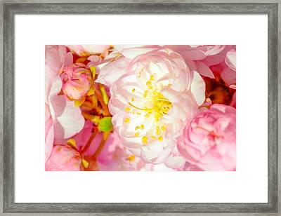 Framed Print featuring the photograph Sakura Cherry Flower - Wedding Of Nature by Alexander Senin