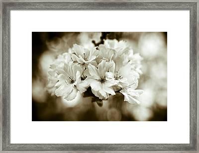 Sakura Framed Print by Frank Tschakert