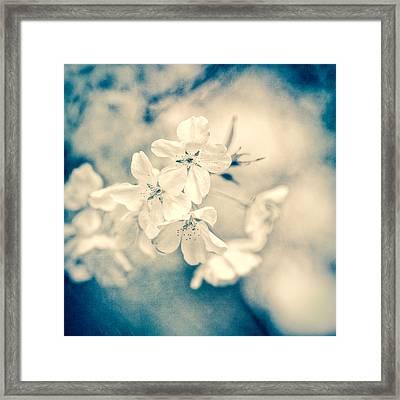 Sakura IIi Framed Print
