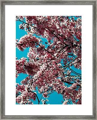 Sakura Framed Print by Juergen Weiss