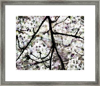 Sakura Framed Print by Ken Walker