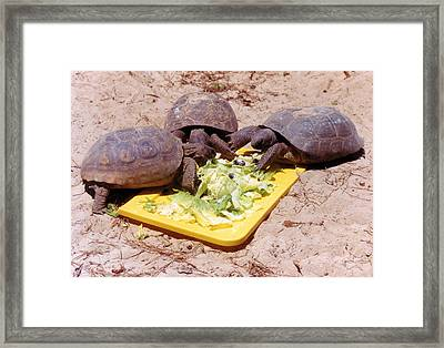 Salad Bar Framed Print by Jan Amiss Photography