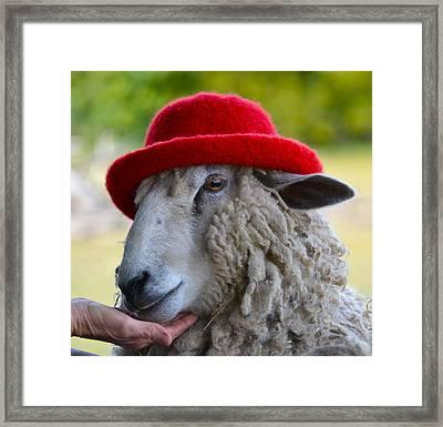 Sally The Sheep Framed Print