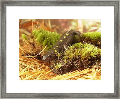 Framed Print featuring the painting Sally The Spotted Salamander by Martha Ayotte