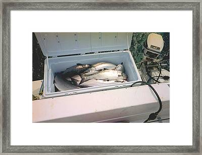 Framed Print featuring the photograph Salmon Catch Of Day by Judyann Matthews
