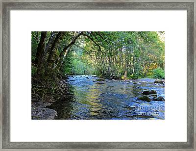 Salmon Creek Majestic  Framed Print by Tim Rice