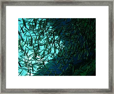 Salmon Framed Print by Mimi B