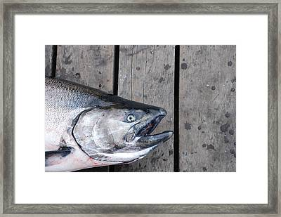 Salmon On Deck Framed Print