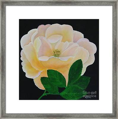 Salmon Pink Rose Framed Print