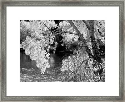 Salmon River Autumn Framed Print