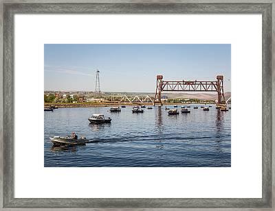 Salmon Stampede Framed Print