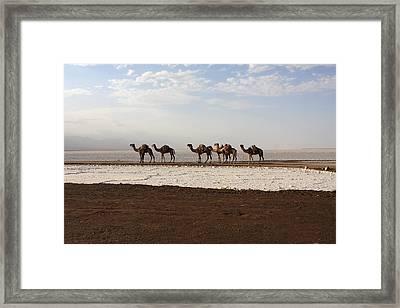 Salt Caravans, Danakil Depression, Ethiopia Framed Print by Aidan Moran