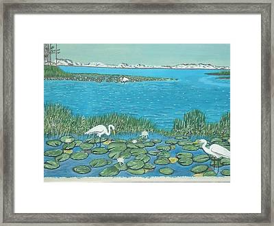 Salt Marsh Egrets Framed Print