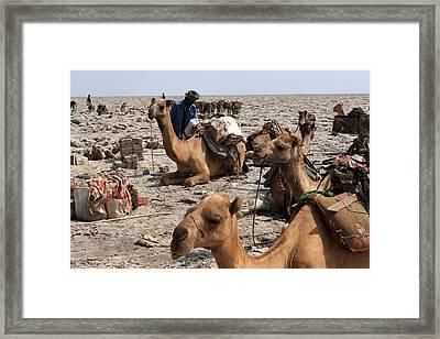 Salt Miners, Danakil Depression, Ethiopia Framed Print by Aidan Moran
