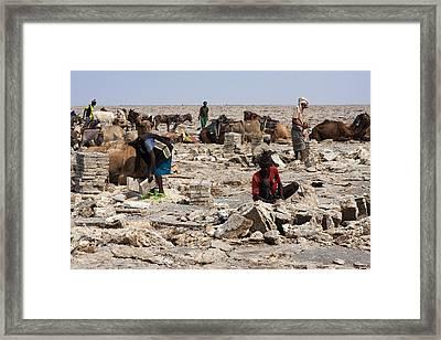 Salt Miners, Ethiopia Framed Print by Aidan Moran