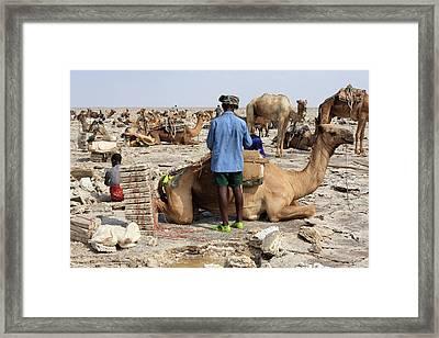 Salt Miners Of Ethiopia Framed Print