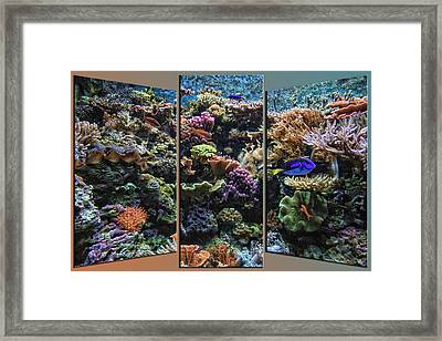 Salt Water Reef And Fish Triptych 3 Panel 01 Framed Print