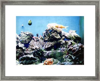 Salt Water Reef  Framed Print by Steve  Heit