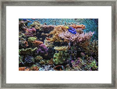 Saltwater Fish 01 Framed Print by Thomas Woolworth
