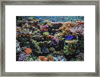 Saltwater Fish 02 Framed Print by Thomas Woolworth
