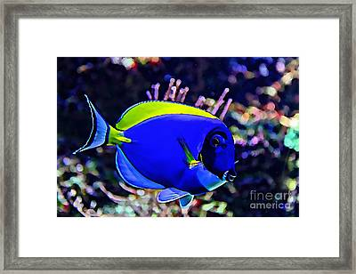 Saltwater Fish Blue Tang Framed Print by Marvin Blaine