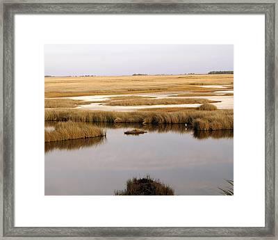 Saltwater Marsh Framed Print by Marty Koch