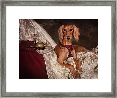 Saluki Dog Framed Print
