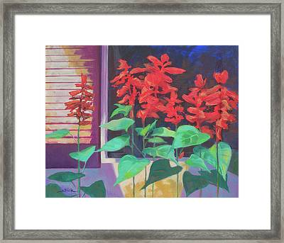 Salvia In The Windowbox Framed Print by Carol Strickland