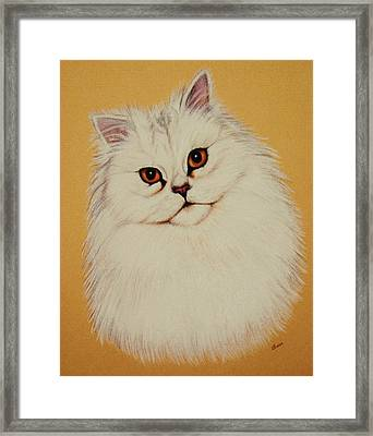 Sam - Persian Cat Framed Print by Lucy Deane