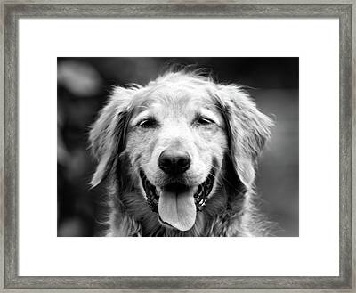 Sam Smiling Framed Print