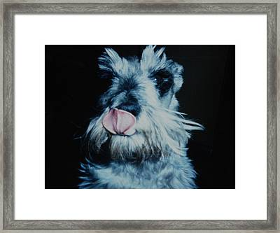 Sam The Fat Cow Framed Print by Rob Hans