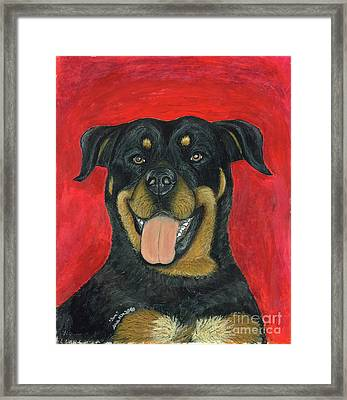 Sam The Rottewieler Framed Print