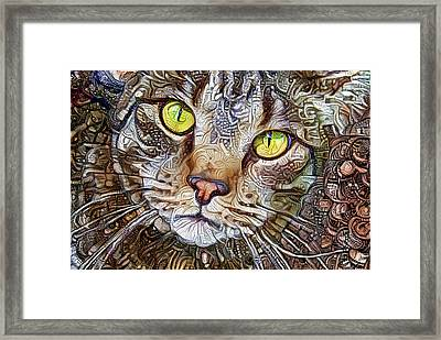 Sam The Tabby Cat Framed Print