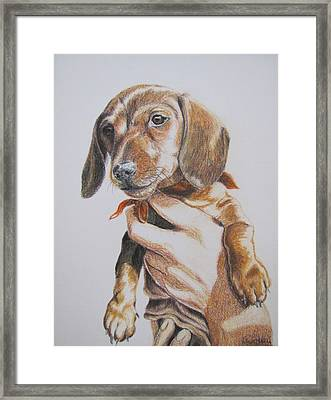 Framed Print featuring the drawing Sambo by Karen Ilari