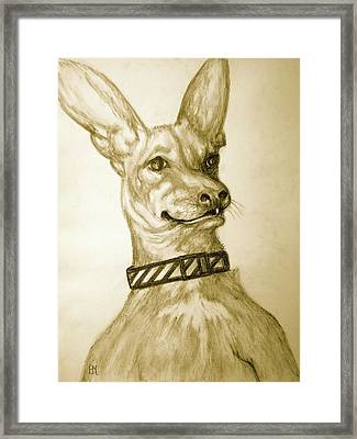Sammy Framed Print by Pete Maier