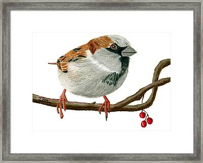 Sammy Sparrow Framed Print