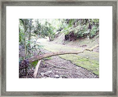San Andres Echologycal Path At Guilarte's Forest Framed Print