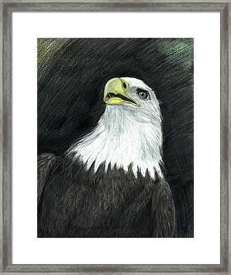 San Diego Bald Eagle Framed Print by Bob Schmidt