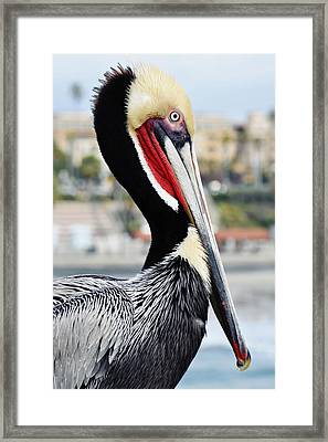 Framed Print featuring the photograph San Diego Pelican by Kyle Hanson