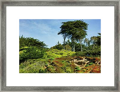 San Francisco Colorful Spring - Blooming Hillside With Pines Framed Print by Georgia Mizuleva