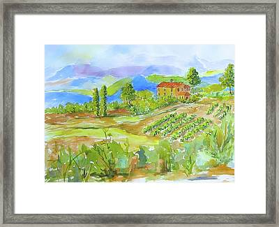 Vineyard At San Gimignano Framed Print