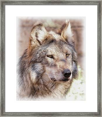 Sancho Framed Print