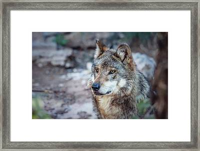 Sancho Searching The Area Framed Print