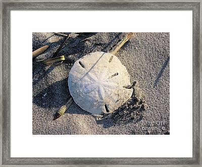 Sand Dollar Framed Print by Katie Monzel
