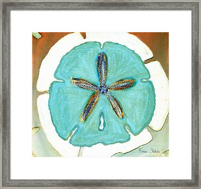 Sand Dollar Star Attraction Framed Print