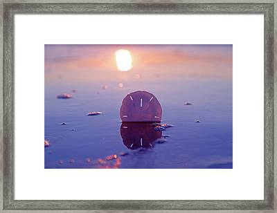 Sand Dollar Sunset Framed Print