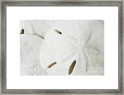 Sand Dollars Framed Print by Bill Brennan - Printscapes