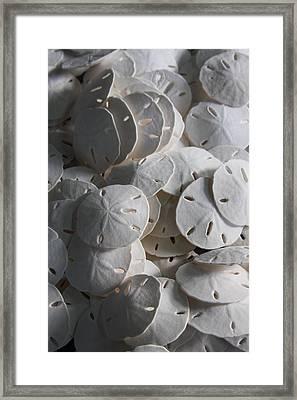 Sand Dollars  Framed Print by Christina Minna
