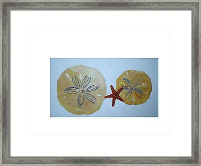 Sand Dollars With Star Fish Framed Print by Hal Newhouser