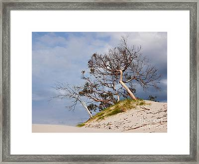 Sand Dune With Bent Trees Framed Print